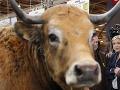Doživotie za zabitie kravy: Náboženské zákony v Indii nemajú zľutovanie