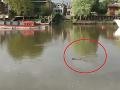 Olympionik si myslel, že má halucinácie: Z londýnskej rieky sa vynoril...