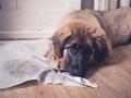 Majiteľka musela psíka nechať pri batožine: Po prílete nastal šok, zlomilo jej to srdce