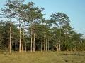 Tragédia v okrese Prešov: Väzňa (†26) pri práci v lese usmrtil lesný ťahač