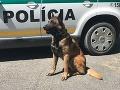 Hrdinský čin policajného psa Nyka: Krásavec na FOTO dal do poriadku muža s kriminálnou minulosťou