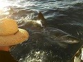 Na českú turistku zaútočil najobávanejší žralok: VIDEO Minúty drámy na lodi plnej turistov