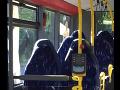 Nevinná FOTO z autobusu vyvolala nenávistné reakcie: Odhalenie pravdy ako facka na prebudenie