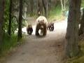 Prvá túra a hneď šok: Oproti turistovi stála medvedica s mladými, VIDEO prvého kontaktu