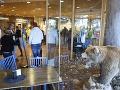 Horor vo švédskej ZOO: Pred očami návštevníkov zabil ošetrovateľa (†19) medveď