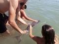 Turisti na pobreží prišli o rozum? Kvôli SELFIE utrápili na smrť mláďatko delfína