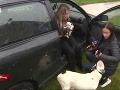 Kristína Kövešová sa problematike psích zápasov venuje už niekoľko rokov.