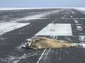 Zamestnanci čistili letiskovú dráhu, keď zrazu museli prestať: Toto sa ešte nikde nestalo