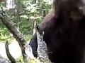 Demeter sa vybral do lesa v Karpatoch: Hororový útok medveďa, skončil polomŕtvy!