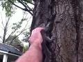VIDEO Rodina pustila späť do prírody zachránenú veveričku: Po pár sekundách nasledoval horor