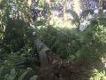 Cykloturistika sa zmenila na drámu: Cyklistu v Pieninách privalil strom