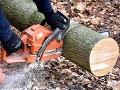 Tragédia v Rakúsku: Na Slováka spadol strom, zomrel na mieste