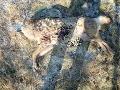 Brutálna smrť vlčice: FOTO Pytliak z Levoče jej odťal hlavu a telo nechal v krovinách