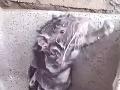 VIDEO potkana, ktorý sa sprchuje ako človek, obletelo svet: Najavo vyšla krutá pravda