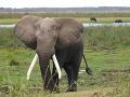 V Keni zabili jedného z popredných vyšetrovateľov nelegálneho obchodu so slonovinou