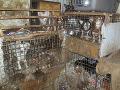 Otrasný prípad týrania zvierat: Dom hrôzy ukrýval 212 psov, výkaly a steny presiaknuté močom