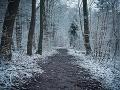 Tragický osud utečenkyne vo Švédsku: S deťmi odišla z azylového centra a zmrzla v lese