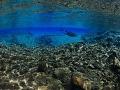 FOTO Vedci zostali v nemom úžase: V oceáne objavili úplne novú zónu s neznámymi druhmi