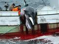 Planéta zaplakala: Japonsko obnoví komerčný lov veľrýb, druhy v ohrození