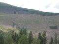 Slovenské lesy v ohrození: Musíme urýchlene prijať novely o ochrane prírody, tvrdí WWF