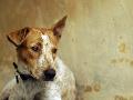 Žena páchala zverstvá na svojom psovi: Žiadne jedlo a voda, reťaz mal vrastenú do krku