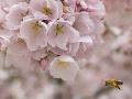 Chemická vojna s prírodou kulminuje: Peľové zrnká útočia! Alergici, ostaňte radšej doma