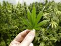 Kanadský senát schválil legalizáciu marihuany: Využívať sa môže na rekreačné účely