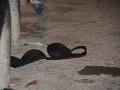 Netvor v ľudskej koži: Syn sa vrhol na vlastnú matku vracajúcu sa z baru a znásilnil ju