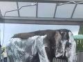 Českí cirkusanti v autoumyvárni umyli slona.