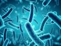 V Južnej Indii šarapatí strašný vírus: Svetoví zdravotníci varujú pred epidémiou