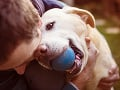 Humorné rozprávanie o psoch