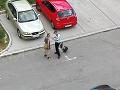 Útok krvilačnej beštie: Policajta vo Veľkom Krtíši pohrýzol MINIpes, VIDEO ruka zákona v akcii