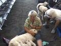 Na fenku prišli pôrodné bolesti: Uprostred letiska prichádzalo na svet jedno šteniatko za druhým