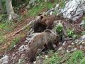 Kamery vo Veľkej Fatre zachytili medvediu rodinku v živom vysielaní: FOTO Tomuto miestu sa vyhnite