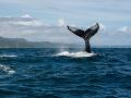 Chránená oblasť pre veľryby v Atlantiku? Nehrozí, komisia zmietla zo stola návrh Brazílie