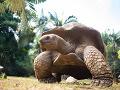 V Nigérii zomrela najstaršia africká korytnačka: Vedci neveria, že sa dožila TOHTO veku