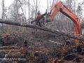 VIDEO Pohľad na zaplakanie: Orangutan sa zúfalo snaží odohnať buldozér, ktorý ničí prírodu