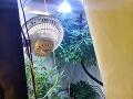 FOTO Prekvapení policajti v Brezne: Objavili laboratórium na pestovanie marihuany