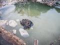Kauza možného znečistenia vodnej plochy v Bratislave: FOTO Polícia to nenechá len tak