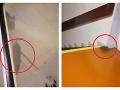 Desivé VIDEO: V bratislavskej nemocnici pobehujú potkany, pacientka neverila vlastným očiam