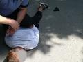 Opitý zlodej (32) strieľal v senickom parku: FOTO Pohotový zásah mestských policajtov