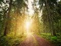 Úctyhodný svetový rekord: Za jediný deň vysadili v Etiópii vyše 200 miliónov stromov