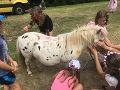 Ľudí šokovala hra detí na rodinnom festivale v Česku: Z FOTO sú zhrození, chudák poník