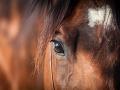 Na Daniela (31) vraj žmurkol kôň, bral to ako znamenie: Sex v stajni uprostred noci