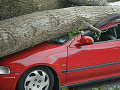 Vážna dopravná nehoda v okrese Levice: Auto narazilo do stromu, dvaja ťažko ranení
