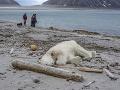 Úrady bránia hliadku, ktorá na Špicbergoch zastrelila medveďa: Pokúšali sa ho vraj odohnať