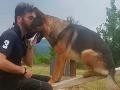 Pes zachraňoval ľudí po zemetrasení v Taliansku: Šok pre majiteľa, niekto mu ho otrávil