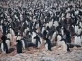 Na ostrove záhadne zmizla takmer celá kolónia tučniakov, vedci si to nevedia vysvetliť