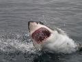 FOTO Muž (58) po útoku žraloka dostal obdivuhodný nápad: V nemocnici ho totiž nikto nechápal