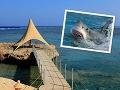 Mrazivé detaily smrti Čecha (†42) v Egypte: Brutálny útok žraloka, telu chýbali ruky aj noha